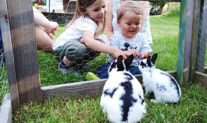 Kinder füttern Hasen