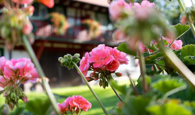 Blumen vor Balkon