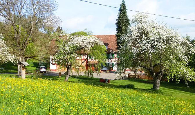 Blühende Apfelbäume rund um den Risthof