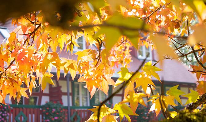 Orangene Blätter im Herbst